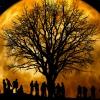 moon and human