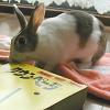 ウサギの本をうさぎのさくらちゃんが推薦します